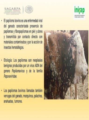 Papilloma virus bovino
