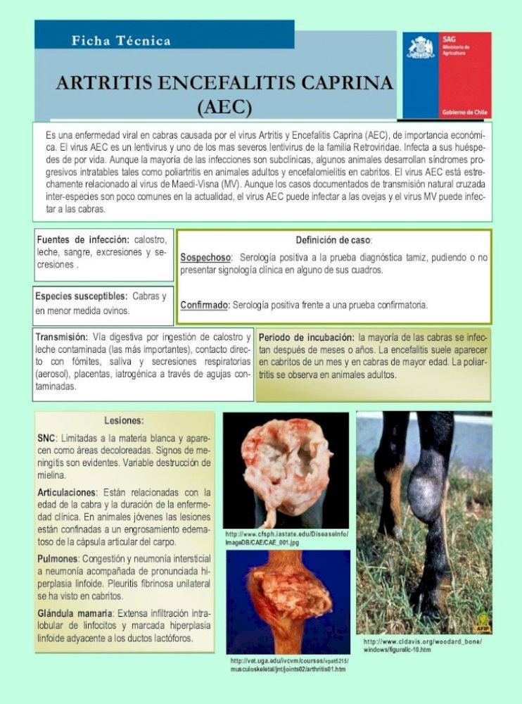 artritis+encefalitis+caprina+pruevas+de+laboratorio